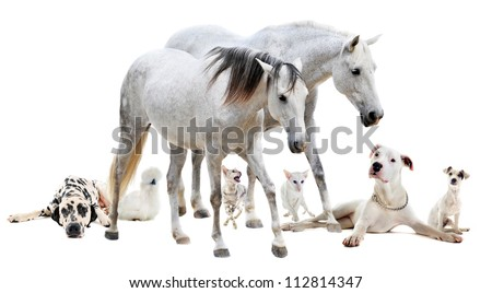 group of white pet in front of white background