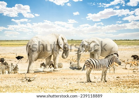 Group of wild mixed animals relaxing on a water pool spot at Etosha Park - World famous natural wonder in the north territory of Namibia - African safari game drives and free wildlife outdoors - stock photo