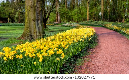 Group of yellow tulips in a park. Spring landscape. - stock photo