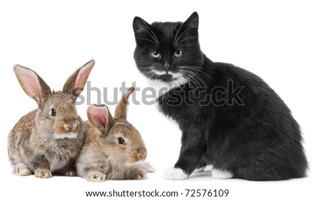 Group of young domestic animals. Black Kitten and brown rabbit - stock photo