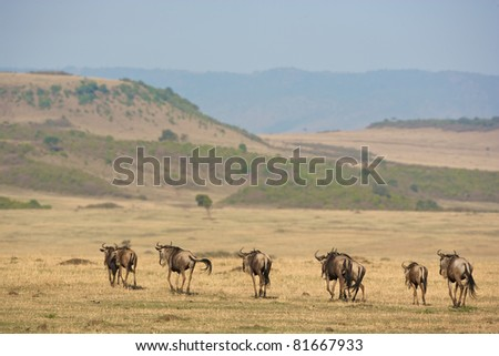 Group of zebras on the African plains