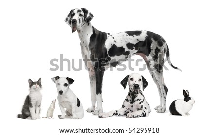 Group portrait of black and white animals - pets - in front of white background