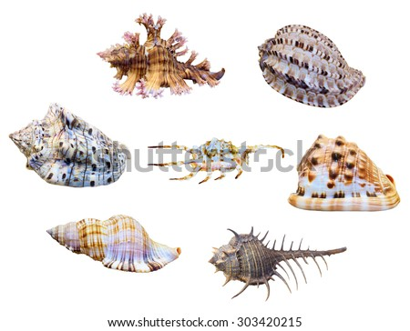 Group shell of sea snail is a marine gastropod mollusk isolated on white background with clipping paths - stock photo