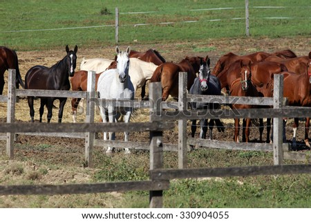 Group thoroughbred mares and foals sharing hay against green natural background - stock photo