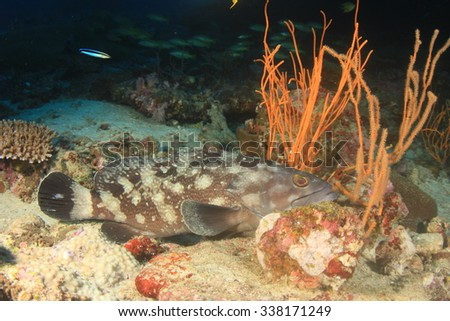 Grouper fish - stock photo
