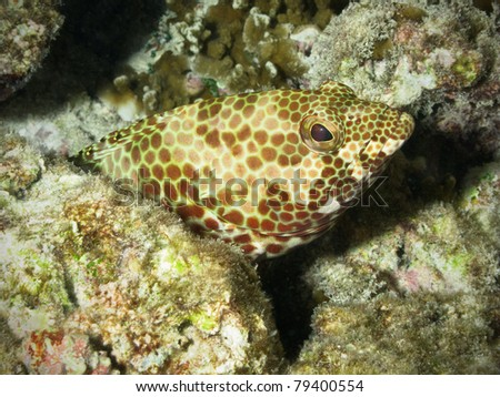 Grouper in coral reef - stock photo