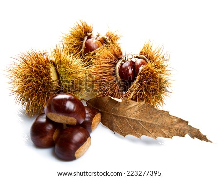 Groups of chestnut nuts on white close up - stock photo