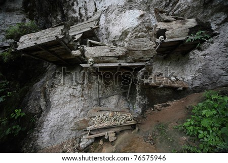 Groups of old family coffins with bones hanging on a rock. Tana Toraja region. Sulawesi island. Indonesia