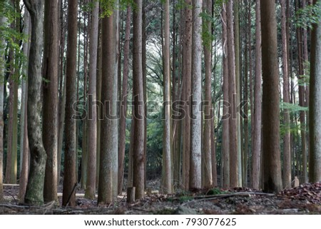 Groups of tree trunks.
