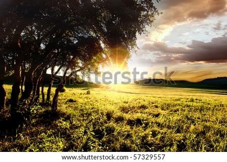 Grove in beautiful golden sunset - stock photo