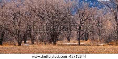 Grove of bare winter trees on the Colorado prairie in a golden grassy field