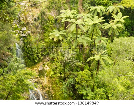 Grove of endemic New Zealand rainforest fern trees in lush green wilderness - stock photo