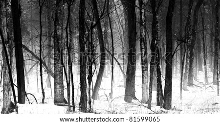 Grove of Hardwood trees in a Tennessee Forest , winter.