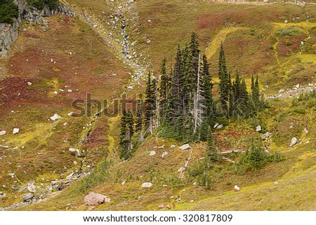 Grove of trees in a subalpine meadow photographed from Golden Gate Trail, Paradise, Mount Rainier National Park, Washington state. - stock photo