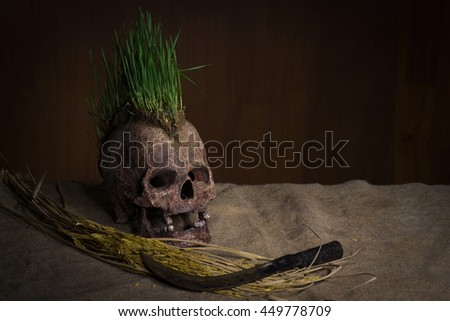 Grow green wheat seedling on head of skull, Still life - stock photo