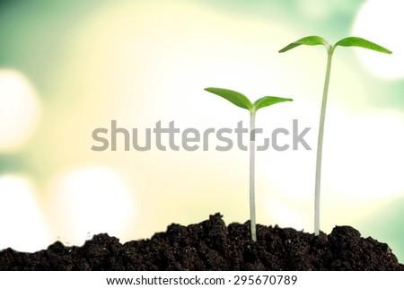 Grow, growing, plant. - stock photo