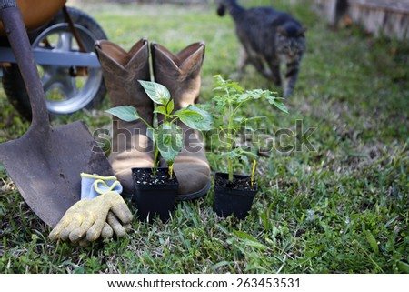 Grow organic: gardening tools and organic sprouts (with cat on background) - stock photo