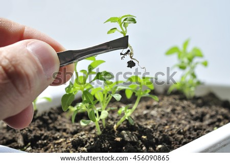 Grower or scientist in work cultivating young plant crop. - stock photo