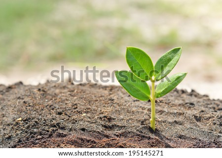 growing a young plant - stock photo