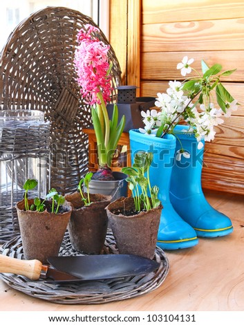 Growing and flowering of balcony. Infatuation for gardening on the window - stock photo