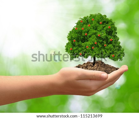 growing apple tree in hand on green natural background - stock photo