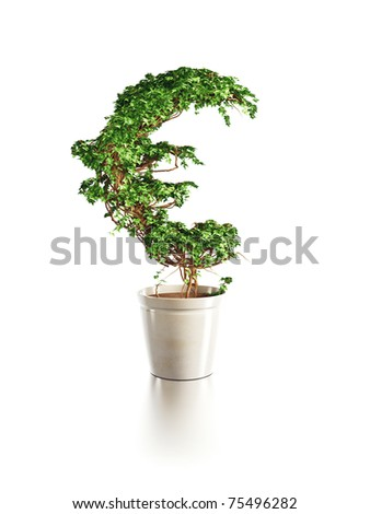 growing euro tree isolated 3d render - stock photo