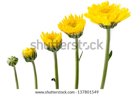 Growing flowers - stock photo