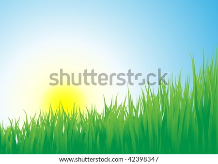 Growing grass on a sunrise background - stock photo