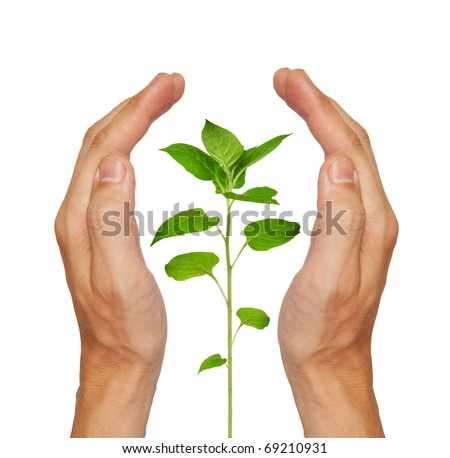 Growing green plant in a hand isolated on white background - stock photo