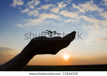 growing green plant in the hand of a farmer against beautiful sky at sunset - stock photo
