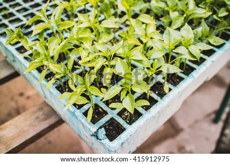 Growing green plants in a box.