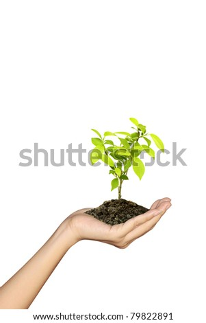 Growing green seedlings in a hand isolated on white background