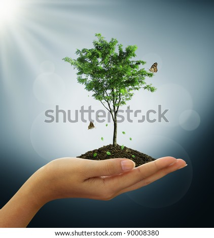 Growing green tree plant in a hand, butterfly - stock photo