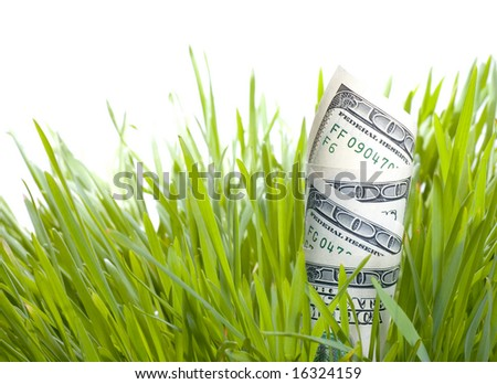 Growing Money - stock photo