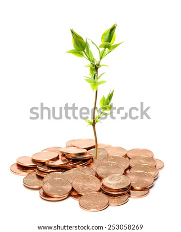 Growing money concept isolated on white - stock photo