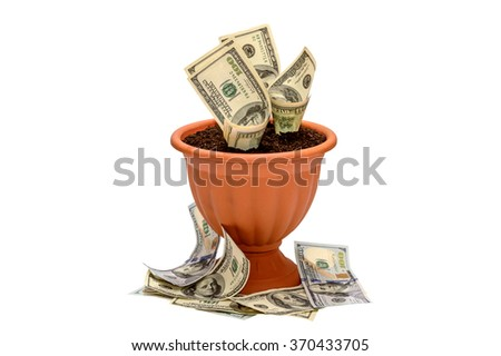 Growing money in flowerpot isolated on white background