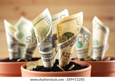 Growing money in flowerpots close up - stock photo