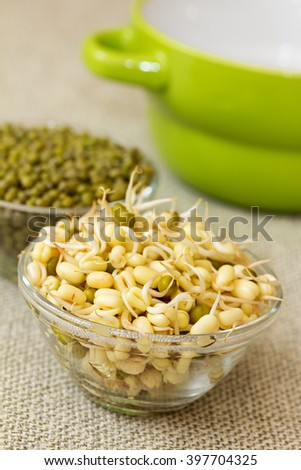 Growing mung bean sprouts. Mung bean sprouts and mung bean dry. Vertical shot. - stock photo