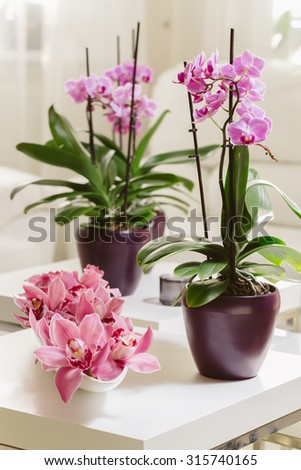 Growing pink orchid with petals arrangment on white table - stock photo