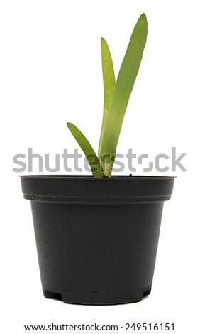 growing plant in black  plastic pot isolated on white background - stock photo