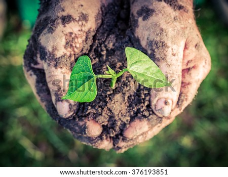 Growing plant in hands - stock photo