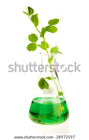 Growing plant in laboratory with nutrition liquid - stock photo