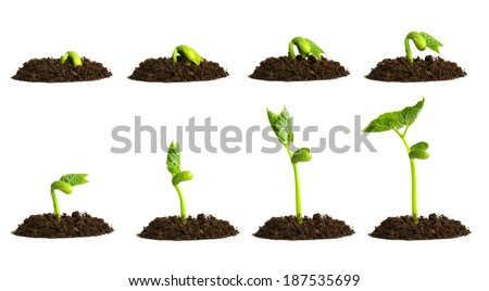 Growing plant in soil isolated on white background. - stock photo