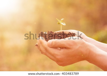 Growing plant in the nature outside with your hands. - stock photo