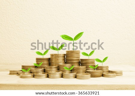 Growing plant on row of coin money for money concept - stock photo