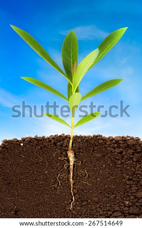 Growing plant with underground root visible and blue sky - stock photo