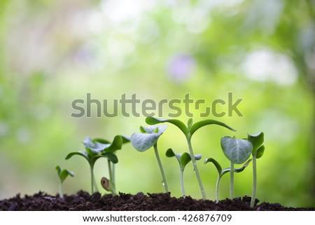 Growing plants - stock photo