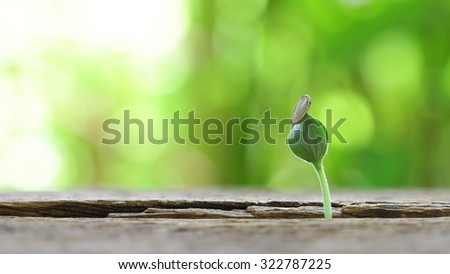 Growing pumpkin plant on wooden table