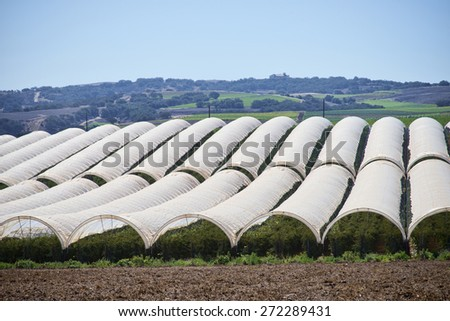 Growing raspberries in the central valley of California, greenhouse tenting - stock photo