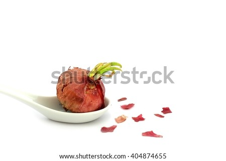 Growing Red Onion with their red skin on white ceramic spoon - white background - stock photo
